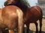 Ponyreiten Stall Luci